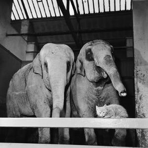 Belle Vue Zoo, 1962 by Howard Walker