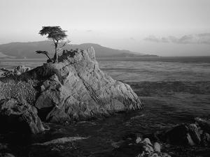 Lone Cypress Tree on Rocky Outcrop at Dusk, Carmel, California, USA by Howell Michael