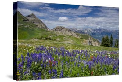 Aster, Lupine, Bistort, Indian Paintbrush, Mt Timpanogos, Utah
