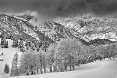 Evergreens and Aspen Trees in a Snow Storm Near Gobbler's Knob, Utah-Howie Garber-Photographic Print