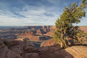 Juniper Tree, Dead Horse Point State Park by Howie Garber