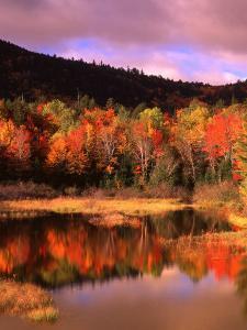 Small Pond and Fall Foliage Reflection, Katahdin Region, Maine, USA by Howie Garber