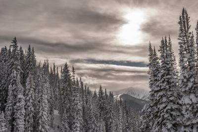 Snow in Evergreens from Beartrap Canyon, Wasatch Mountains, Utah by Howie Garber