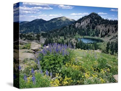 Wildflowers and Lake Catherine, Pioneer Peak, Uinta Wasatch Nf, Utah