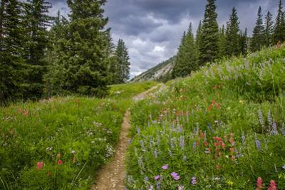 Wildflowers in the Albion Basin, Uinta Wasatch Cache Mountains, Utah by Howie Garber