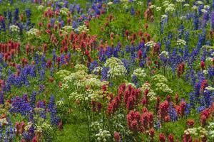 Wildflowers, Mount Timpanogos, Uintah-Wasatch-Cache Nf, Utah by Howie Garber