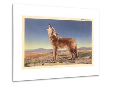 Howling Coyote--Metal Print
