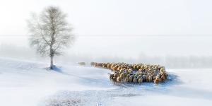 In Snow by Hua Zhu