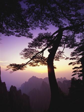 https://imgc.artprintimages.com/img/print/huangshan-pine-in-the-huangshan-mountains_u-l-pzkpqe0.jpg?p=0