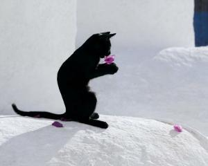 Cat and Flower by Hubert & Klein