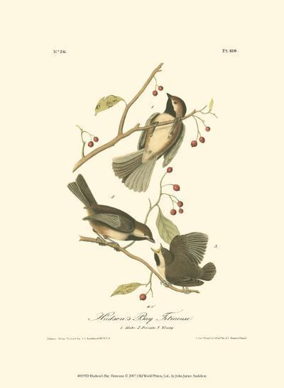 Hudson's Bay Titmouse-John James Audubon-Art Print