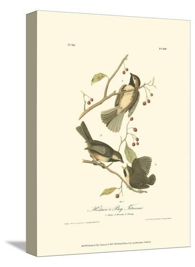 Hudson's Bay Titmouse-John James Audubon-Stretched Canvas Print
