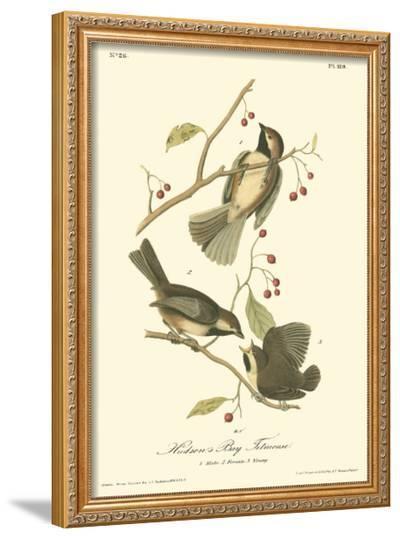 Hudson's Bay Titmouse-John James Audubon-Framed Giclee Print