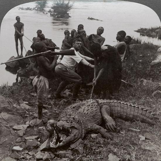 Huge Crocodile Just Landed - Beside the Upper Nile, East Africa, c.1905-Underwood & Underwood-Photographic Print