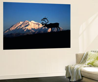 Caribou Wildlife, Mt McKinley, Denali National Park and Preserve, Alaska, USA