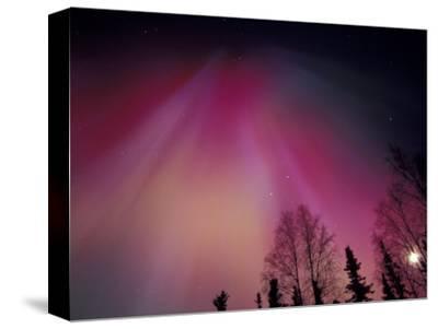 Curtains of Colorful Northern Lights Above Fairbanks, Alaska, USA