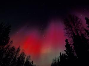 Curtains of Northern Lights above Fairbanks, Alaska, USA by Hugh Rose