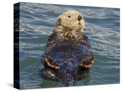 Sea Otter, Prince William Sound, Alaska, USA