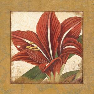 Amaryllis Bloom by Hugo Wild