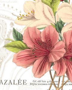 Azalee Jardin I by Hugo Wild