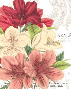 Azalee Jardin II by Hugo Wild