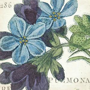 Blue Floral by Hugo Wild