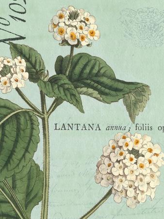 Botanique Bleu I