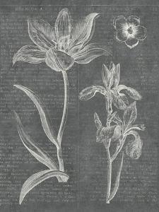Eden Spring II Gray by Hugo Wild