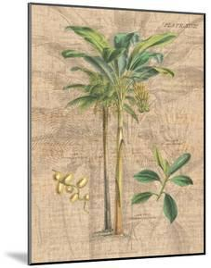 Palm Study I by Hugo Wild