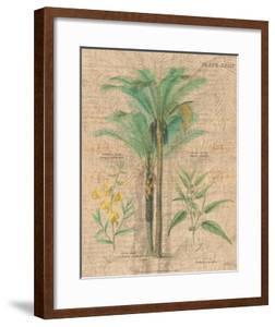 Palm Study II by Hugo Wild