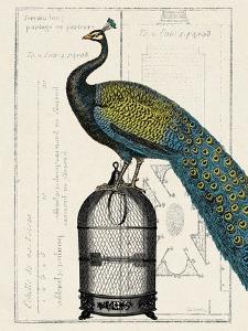 Peacock Birdcage II by Hugo Wild