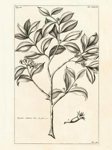 Tropical Leaf Study I by Hugo Wild