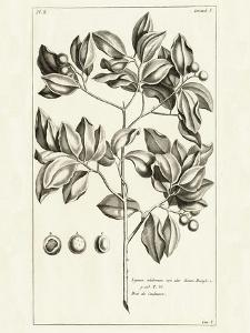 Tropical Leaf Study II by Hugo Wild
