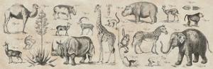 Wild Africa by Hugo Wild