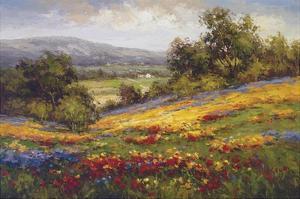 Campo di Fiore I by Hulsey