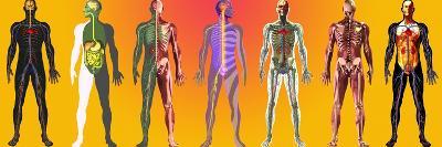 Human Anatomy ,artwork-Mehau Kulyk-Photographic Print