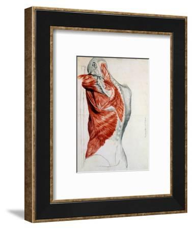 Human Anatomy, Muscles of the Torso and Shoulder-Pierre Jean David d'Angers-Framed Premium Giclee Print