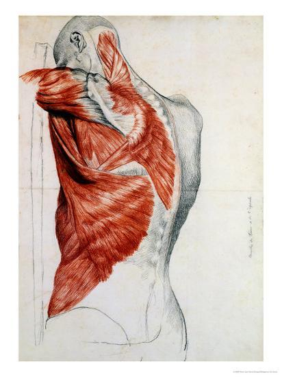 Human Anatomy, Muscles of the Torso and Shoulder-Pierre Jean David d'Angers-Giclee Print