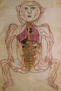 Human Circulation System from Mansur's Anatomy by 15th C. Persian Mansur Ibn Ilyas
