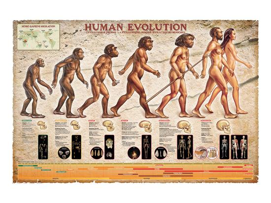 Human Evolution--Art Print