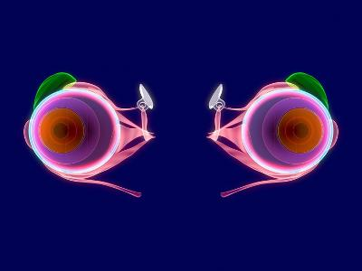Human Eye Anatomy, Artwork-Roger Harris-Photographic Print