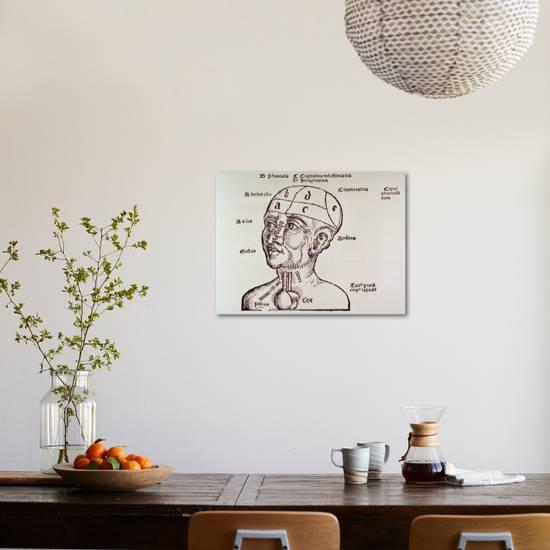 Human Head Mapping Sections Of The Brain To Corresponding Body Parts 1513 Art Print By Art Com