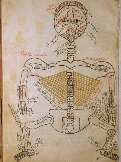 Human Skeleton from Mansur's Anatomy by 15th C. Persian Mansur Ibn Ilyas--Art Print