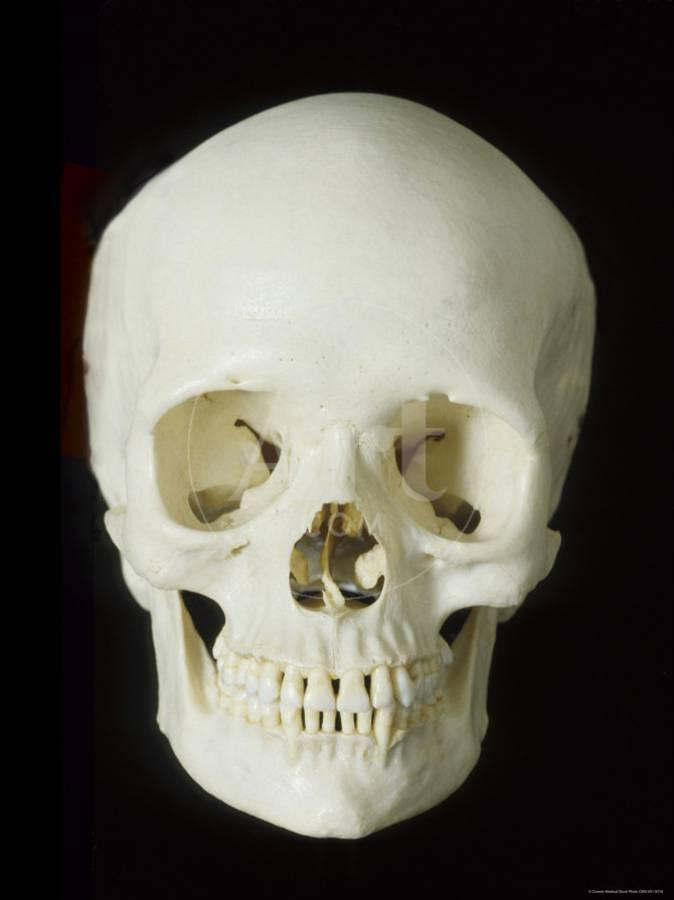 Human Skeleton Skull Front View Photographic Print By Art
