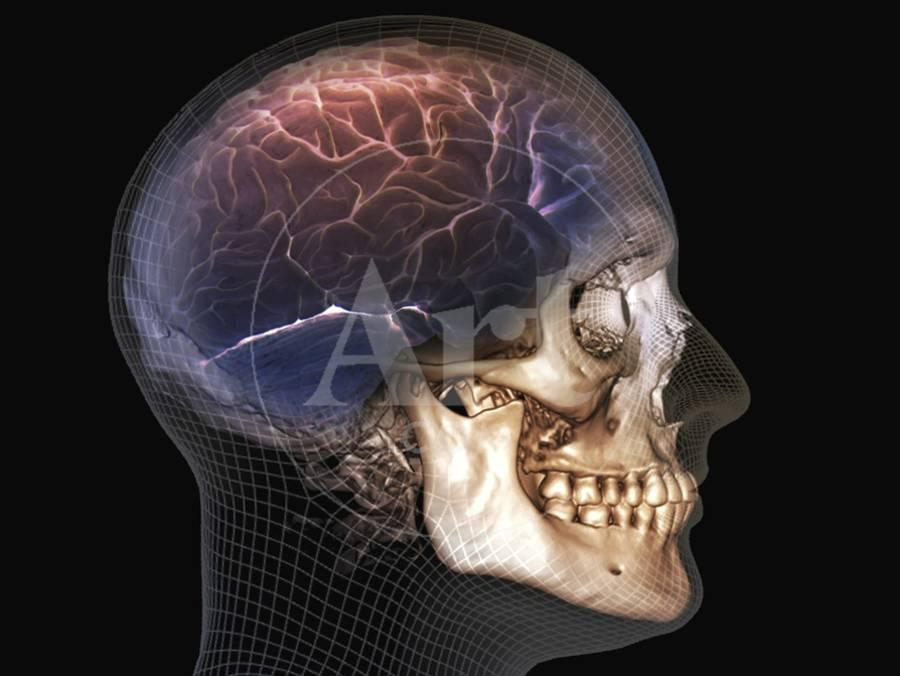Human Skull and Brain, 3D CT Scan Photographic Print by | Art com
