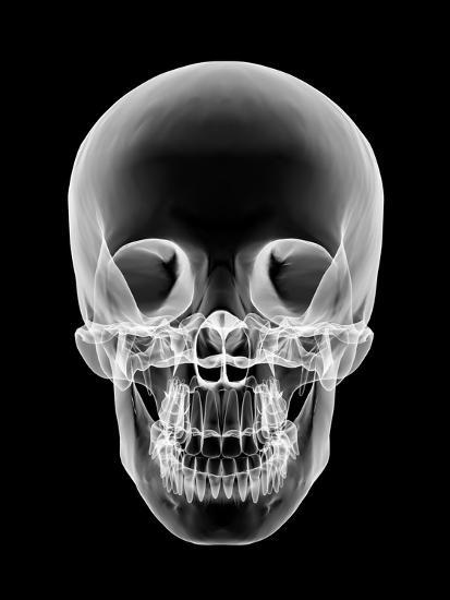 Human Skull, X-ray Artwork-PASIEKA-Photographic Print