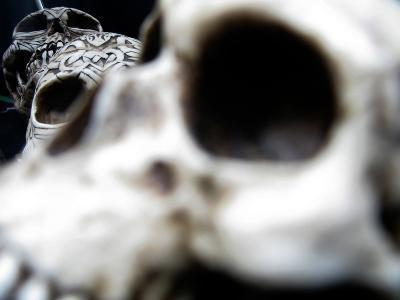 Human Skulls-Jason Martin-Photographic Print