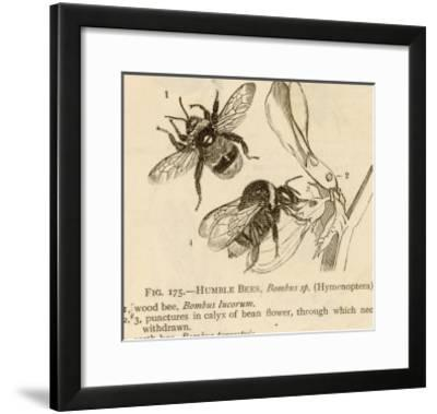 Humble Bees--Framed Giclee Print
