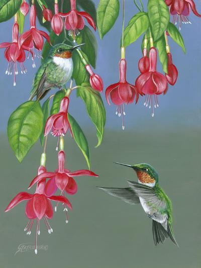 Hummers and Fuchsia-Fred Szatkowski-Art Print