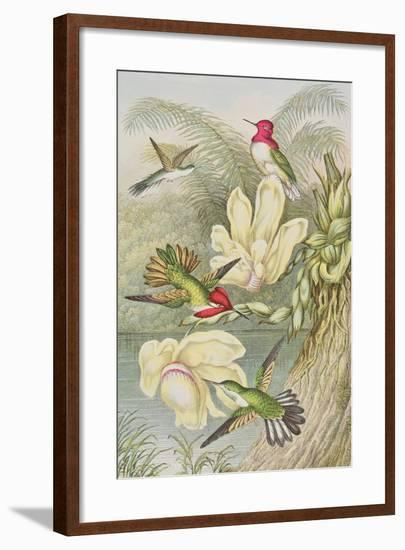 Humming Birds Among Tropical Flowers--Framed Giclee Print